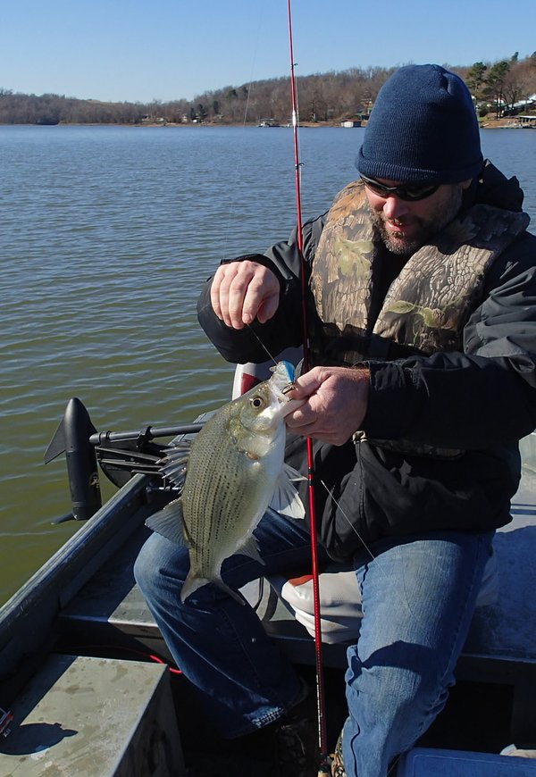 39 tis the season for striped bass at beaver lake for Beaver lake striper fishing