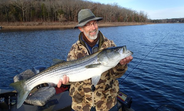 Small flies catch big stripers at beaver lake nwadg for Beaver lake striper fishing