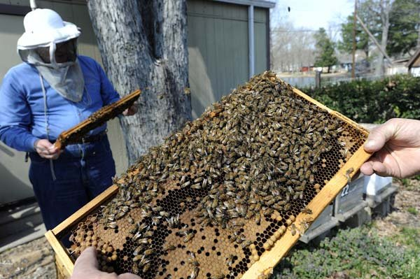 Rainy days hurt honey production