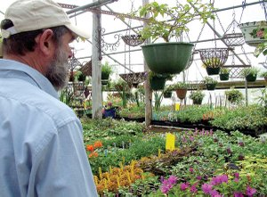 Steve Davison looks over the many plants prepared for planting in one of the four greenhouses on the Perennials Etc. property on U.S. Highway 62 east of Garfield. See more articles in this week's Home and Garden insert.