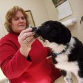Sherryl Robinson with Border Collie Rescue of the Ozarks feeds a treat to Olivia while waiting for a...