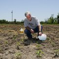 David Nelson waters his tomatoes at the community garden on McCollough Drive in Springdale. Nelson l...