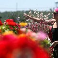 Olivia Apple of Goshen shops for flowers at College Gardens Tuesday, May 4, 2010 off College Avenue ...