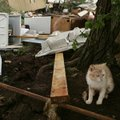 A muddy kitten takes cover next to a tree after a tornado swept through the mobile home community of...