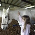 Devlon, an Irish Warmblood owned by Krissi Washburn, stands patiently as fourth-grader Isabel Shipm...