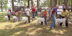 Members of the Bloomfield 4-H club showed goats on Saturday morning at the Gentry City Park. The showing is the club members' last opportunity to show their animals before the Benton County Fair later this month.