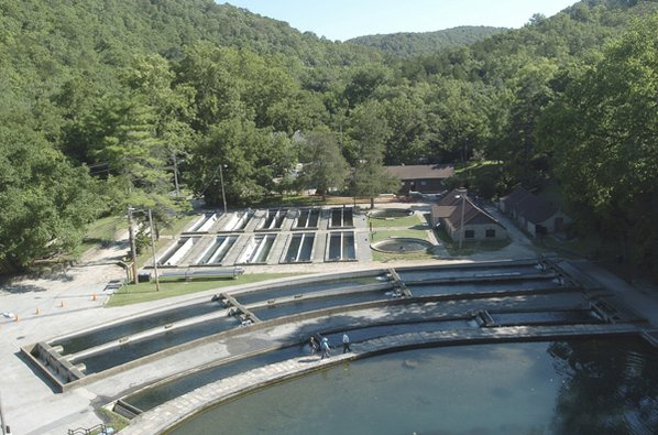 A century of trout nwadg for Roaring river fish hatchery