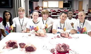 Anusha Majagi of Rogers (left), Trey Perkins of Bentonville, Lexi Anglin of Siloam Springs, Russell Sharp of Gravette, Nick Vang of Siloam Springs, Monica Hamilton of Rogers and Alex Hufford of Bella Vista recently attended a Medical Application of Science for Health camp where they learned more about anatomy.