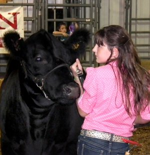 Presley Smith of Decatur kept her eye on the judge as she presented her Black Angus heifer at the Benton County Fair on Friday evening. The duo went on to win the Grand Championship in their class.