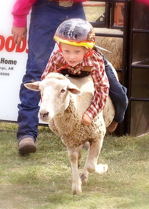 A young rider hangs on for a wild ride in this year's new attraction at the festival, mutton bustin' in the park.
