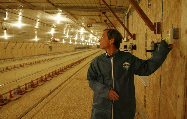 Savings Shine For Poultry Houses With Led Lights Nwadg