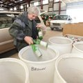 Pam Abshier empties glass bottles into barrels for recycling Tuesday while sorting recyclables from ...