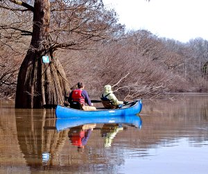 Elaine and Steve Cattaneo paddle their canoe near a tree with a sign marking the water trail on Wattensaw Bayou.
