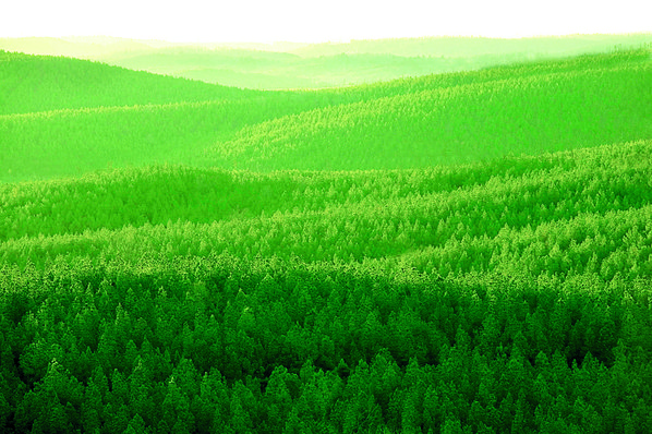 Deltic Timber woodlands West of ...