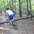 Mountain bikers hop over a pine felled by Gordan.