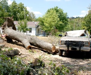 This tree trunk shows its size compared to the pickup which was smashed by the weight of the uprooted tree. The street, completely blocked by the branches, had been cleared of debris. Numerous Sulphur Springs streets were cluttered by tree debris.