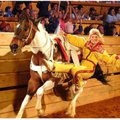 Dolly Parton's Dixie Stampede is dinner theater on the run.