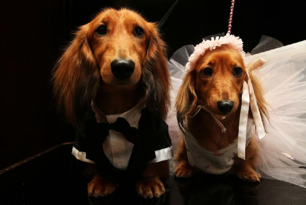 Same-sex pup services sully Dog Marriage Daze