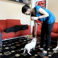 Desiree Finkbeiner gives a treat Wednesday to her family's therapy pig Coconut at their home in Roge...