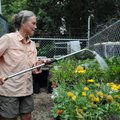 Lissa Morrison, gardener at the Botanical Garden of the Ozarks, waters potted shrubs she has fertili...