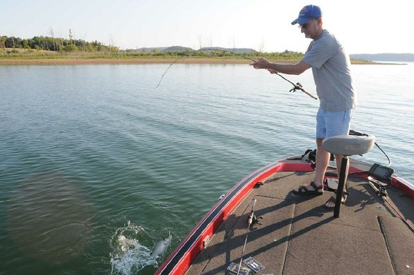 Pound for pound, white bass are among the hardest-fighting fish at Beaver Lake.