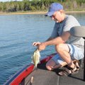 Beaver Lake and its tributaries are the only waters in Arkansas where there is no daily limit on whi...