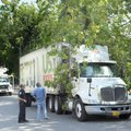 Fayetteville police and urban forestry officials work Friday to free a food service truck after it b...