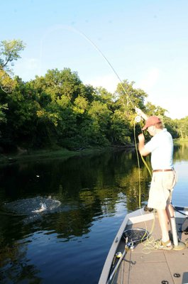 A Lake Taneycomo rainbow trout gives Lilley a fight on his fly rod.