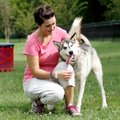 Bethany Simpson of Centerton kneels to pet her husky, Akilles, on Sept. 7 at the Bark Park in north ...