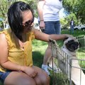 Phet Thirakoun of Springdale visits Saturday with Lulu, a 4-year-old pug at the Humane Society for A...