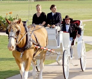 Lori Whillock is pictured with her carriage, pulled by Champ. Passengers Jessica Ray and Tim Wallis are working as drivers for Whillock's new business, Executive Carriages.