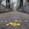 An autumn scene was worth a stop Oct. 25 along the Katy Trail in central Missouri. The Katy crosses ...