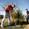 Josiah May, 17, left, and Cody Rodgers, 15, work together Saturday to dig up a bush blocking the roc...