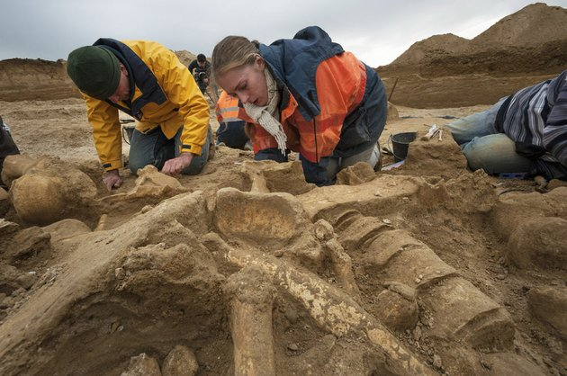this-photo-dated-oct-30-2012-released-wednesday-nov-7-2012-by-archeological-group-inrap-shows-unidentified-archeologists-working-along-the-changis-sur-marne-riverbank-about-30-miles-east-of-paris-after-unearthing-the-rare-near-complete-skeleton-of-a-mammoth-which-has-been-christened-helmut-the-remains-which-include-four-connected-vertebrae-and-a-complete-pelvis-dating-back-some-200000-50000-years-ago-were-discovered-by-accident-during-excavations-at-an-ancient-roman-site