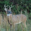 Deer hunters may take bucks and does in Northwest Arkansas during the modern gun deer season, which ...