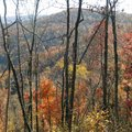 The Ozarks remain bright with color in November. A hike in the Buffalo River area on Saturday, Novem...