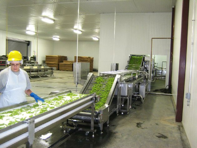 a-worker-processes-edamame-a-choice-type-of-soybean-at-the-recently-opened-american-vegetable-soybean-and-edamame-inc-plant-in-mulberry