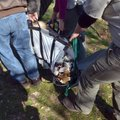 Crews with Turpentine Creek Wildlife Refuge carry Princess out of her cage at Riverglen Tiger Shelte...