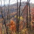 Fall color was abundant during early November on the Goat Trail hike.