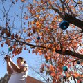 Catherine Calhoun of Fayetteville decorates a flowering dogwood tree Sunday in front of her home on ...