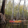 Zoie Clift, left, and Kirsten Bartlow explore the swamp.