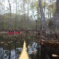 Blazes on trees help paddlers find their way through the swamp on this Arkansas Water Trail at Bayou...