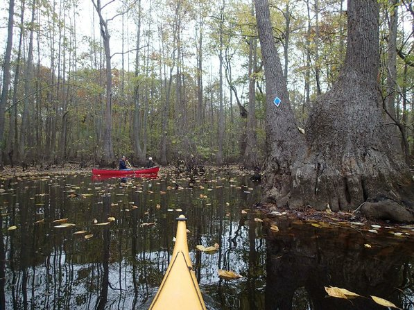 Blazes on trees help paddlers find their way through the swamp on this Arkansas Water Trail at Bayou De View. The Arkansas Game & Fish Commission is developing water trails around the state.