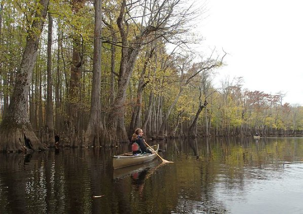 Kirsten Bartlow, watchable wildlife coordnator with Game & Fish, paddles along Lake Hickson, a natural lake that is a wide spot along Bayou De View.