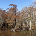 East Arkansas swamps are part of the Arkansas Water Trails system. Bayou De View near Brinkley, show...
