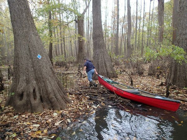 Low water has troubled swamp paddlers this year just as it has hampered paddling on upland streams. Mikki White drags her canoe over a low spot during a trip along the Bayou De View water trail.