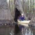 Debbie Doss of Conway paddles frequently among the majestic trees of the Bayou De View swamp.
