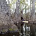 Debbie Doss of Conway explores the wonders of a swamp while paddling on Bayou De View, one of the ro...