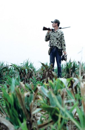 A solo hunt for doves can be highly successful if the hunter scouts before going afield.