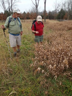 Bob Ross, left, and Dennis Heter examine native plant life during the hike.